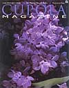 Lilac Flowers Stock Picturesmagazine cover judywhite