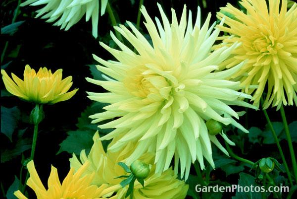 Gardenphotos Com Light Gallery Calendar Images Horizontal