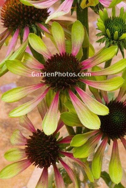 Garden Photos Of The Week By Judywhite At Gardenphotos Com